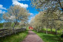 Idylliczny Szwecja przy wiosną zdjęcie royalty free