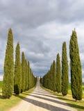 Idylliczny toskanka krajobraz z cyprysową aleją blisko Pienza, Val d'Orcia, Włochy zdjęcie stock
