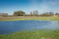 Idylliczny widok łąka, woda po deszczu, drzewa i pogodny niebo, obraz royalty free