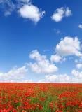 Idylliczny widok, łąka z czerwonym maczka niebieskim niebem w tle zdjęcie stock