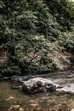 Idylliczny widok Cudowna rzeka, Otaczający lasem obraz royalty free