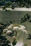 Idylliczny widok Cudowny jezioro, Otaczający lasem obrazy royalty free