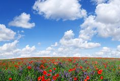 Idylliczny widok, ??ka z czerwonym maczka niebieskim niebem w tle zdjęcia royalty free