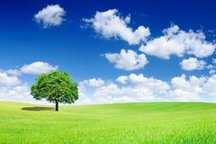 Idylliczny widok, osamotniony drzewo na zieleni polu zdjęcie stock
