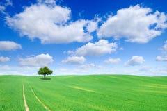 Idylliczny widok, osamotniony drzewo na zieleni polu fotografia stock