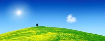 Idylliczny widok słońce błyszczy nad osamotnioną drzewną pozycją na gre fotografia royalty free