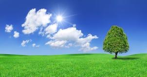 Idylliczny widok słońce błyszczy nad osamotnioną drzewną pozycją na gre obraz stock