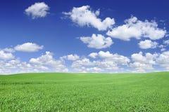 Idylliczny widok, zieleni pole i niebieskie niebo z białymi chmurami, obraz stock