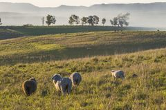 Idylliczny wieś krajobraz Batovi wzgórze, Urugwaj fotografia stock