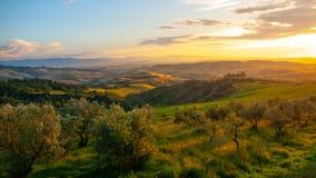 Idylliczny wieczór zmierzch w toskanka krajobrazie z zielonymi wzgórzami, Tuscany, Włochy obraz royalty free