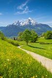 Idylliczny wiosna krajobraz w Alps z łąkami i kwiatami obraz royalty free