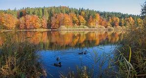 Idyllique amarrez le weiher de deininger de lac à l'aube, le paysage automnal b photos stock