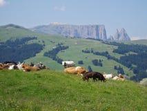 Idyllisch berglandschap Royalty-vrije Stock Foto