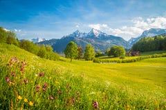 Idyllisch berglandschap in de Alpen met bloeiende weiden in de lente royalty-vrije stock afbeelding