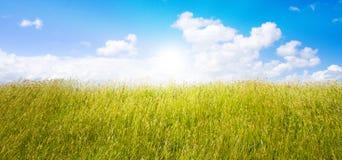 Idyllisch gazon met zonlicht Royalty-vrije Stock Afbeelding