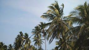 Idyllisch laag hoekschot als achtergrond van vreedzame kokosnotenpalmen bij de exotische strandtoevlucht, zonnige dag met duideli stock videobeelden