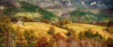 Idyllisch plattelandspanorama op groene die weide, door boom wordt omringd royalty-vrije stock afbeeldingen