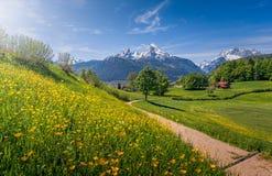 Idyllische alpine Landschaft mit blühenden Wiesen und schneebedeckten Gebirgsoberteilen stockfotografie