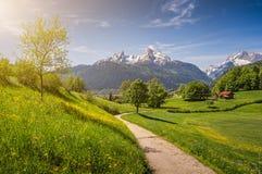 Idyllische alpine Landschaft mit blühenden Wiesen und schneebedeckten Gebirgsoberteilen stockfoto