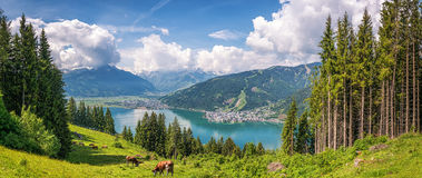 Idyllische alpine Landschaft mit den weiden lassenden Kühen und berühmtem Zeller See, Salzburg, Österreich Lizenzfreie Stockbilder