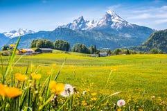 Idyllische alpine Landschaft mit grünen Wiesen, Bauernhäusern und Oberteilen des schneebedeckten Bergs Stockfotografie