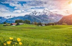 Idyllische alpine Landschaft mit grünen Wiesen, Bauernhäusern und Oberteilen des schneebedeckten Bergs lizenzfreie stockfotografie