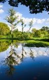 Idyllische boombezinning in het meer Stock Afbeelding