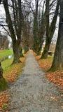 Idyllische de herfst het lopen sleep dichtbij de kleine rivier royalty-vrije stock afbeelding