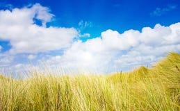 Idyllische duinen met zonlicht Stock Afbeelding