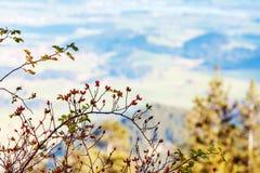 Idyllische Herbstlandschaft in den Alpen Lizenzfreies Stockbild