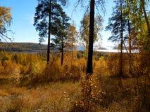 Idyllische Herbstwaldschönheit Stockfotografie