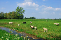 Idyllische holländische Landschaft. Stockfotografie