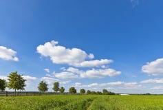 Idyllische landelijke landbouwgrond, Cotswolds het UK Royalty-vrije Stock Fotografie