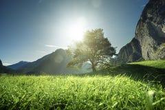 Idyllische Landschaft in den Alpen, im Baum, im Gras und in den Bergen lizenzfreie stockbilder