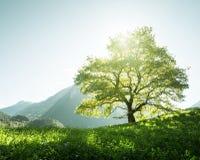 Idyllische Landschaft in den Alpen, im Baum, im Gras und in den Bergen stockbild