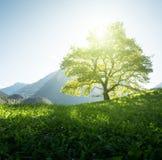 Idyllische Landschaft in den Alpen, im Baum, im Gras und in den Bergen stockfoto