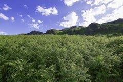 Idyllische Landschaft des See-Bezirks-Nationalparks, Cumbria, Großbritannien lizenzfreies stockbild