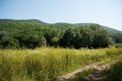 Idyllische Landschaft mit frischen grünen Wiesen und blühende Blumen und Berge im Hintergrund Lizenzfreies Stockbild