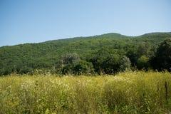 Idyllische Landschaft mit frischen grünen Wiesen und blühende Blumen und Berge im Hintergrund Lizenzfreie Stockfotos