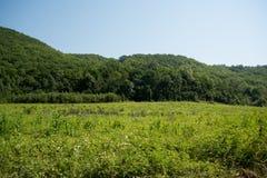 Idyllische Landschaft mit frischen grünen Wiesen und blühende Blumen und Berge im Hintergrund Lizenzfreie Stockfotografie