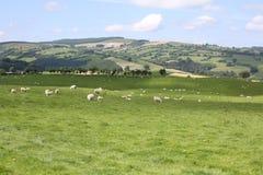 Idyllische Landschaft in Wales, Großbritannien Lizenzfreies Stockbild