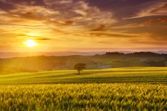Idyllische mening, mistige Toscaanse heuvels gezien de het toenemen zon royalty-vrije stock fotografie