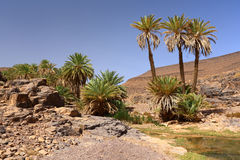 Idyllische Oase in Sahara Desert, Marocco, Uarzazat Stockbild