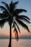 Idyllische Palme in der tropischen Landschaft lizenzfreies stockfoto