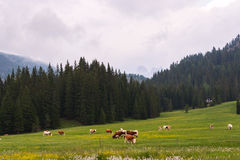 Idyllische Sommerlandschaft in den Dolomit Stockfotografie