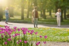 Idyllische Szene des Morgens im sonnigen Park Lizenzfreies Stockfoto