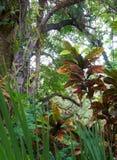 Idyllische tropische scène Stock Afbeeldingen