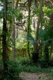 Idyllische tropische weg Royalty-vrije Stock Fotografie