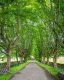 Idyllische weg langs de Rivierbezem, dichtbij Ullapool, in Ross-Graafschap, Schotse Hooglanden royalty-vrije stock foto's