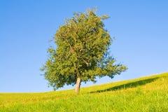 Idyllische Wiese mit Baum Lizenzfreies Stockfoto